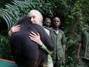 El conmovedor abrazo de Wounda, la chimpancé liberada por Jane Goodall-Viaje Hacia Si Mismo