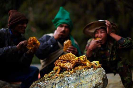 El milenario arte de los recolectores de miel del Himalaya..-ViajeHaciaSíMismo