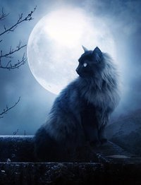 La Nueva Luna de Tauro (Abril 2014) _ La lunación para todos los signos_5