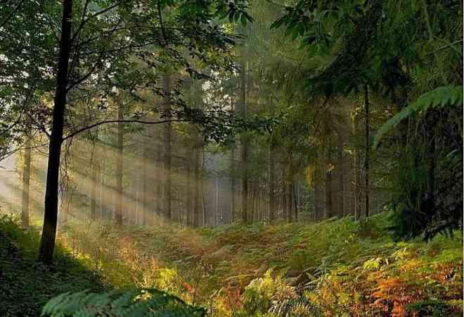 Broncelandia, el bosque secreto de Merlín_