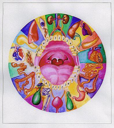 La dentadura refleja la buena salud _ Relación de dientes y órganos-00