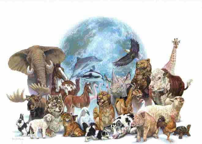 Animales al Servicio de la Humanidad Perros, Gatos, Caballos, Delfines y más_00