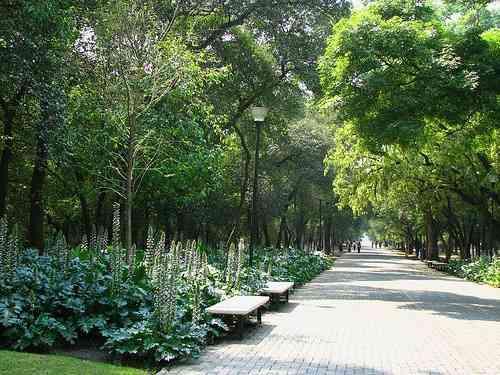 Científicos descubren que estar en zonas verdes mejora la salud mental-0P