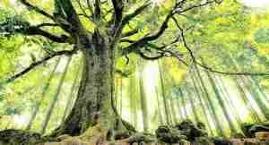 El bosque interior-33