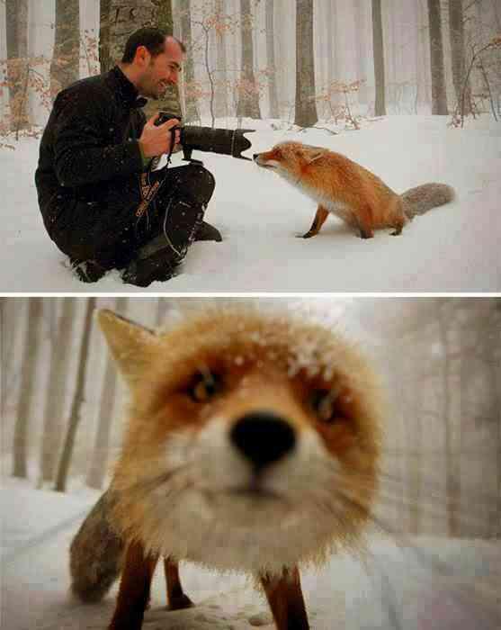 El único disparo que merece un animal_0P