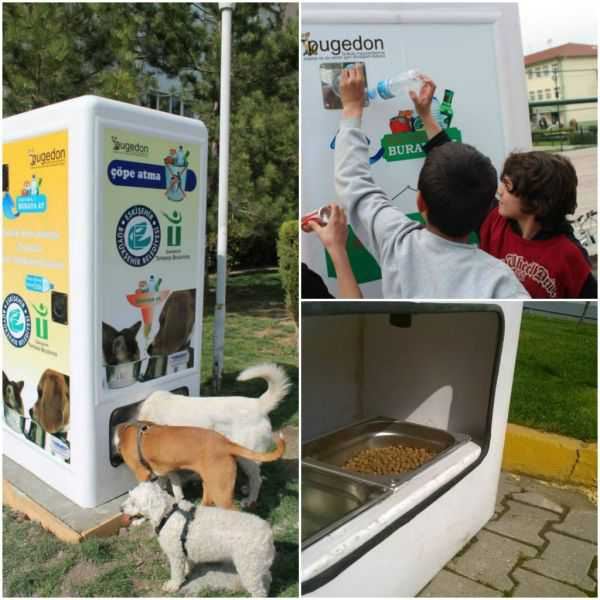 Ideas con corazón. Reciclaje de botellas y comederos para animales callejeros-00