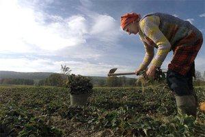 La Agricultura Orgánica se abre un espacio en Polonia_01