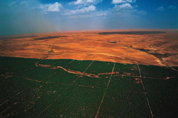 La Gran Muralla Verde Africana-great-green-tree[1]