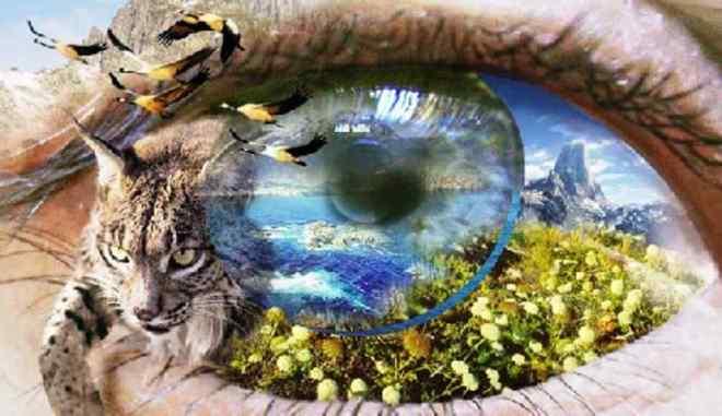 Percibir la naturaleza desde el corazón _ Eckhart Tolle