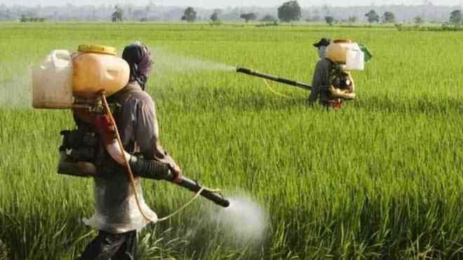 En India utilizan Coca Cola y Pepsi como pesticidas_viajehaciasimismo.wordpress.com
