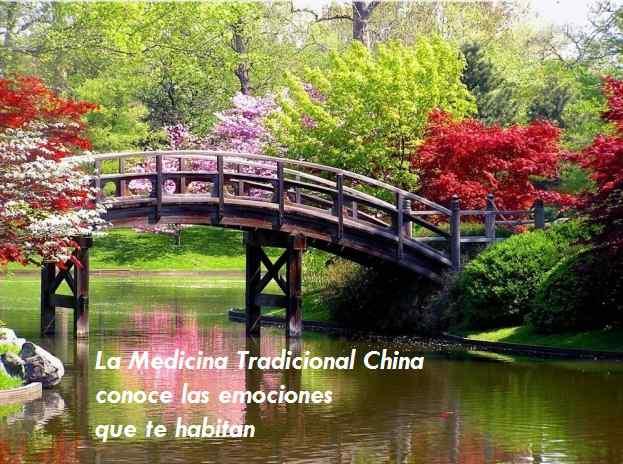 Dónde y por qué se estancan las emociones _ Medicina Tradicional China_Viaje Hacia Si Mismo