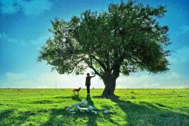 Las 14 especies de árboles que al abrazarlos sanan diversas partes del cuerpo_Viaje Hacia Si Mismo-44