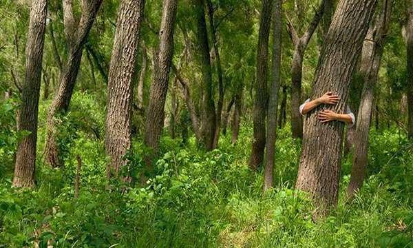 Las 14 especies de árboles que al abrazarlos sanan diversas partes del cuerpo_Viaje Hacia Si Mismo