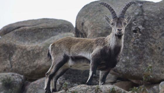 Horóscopo chino Los signos para el 2015 en el año de la cabra_Viaje Hacia Si Mismo