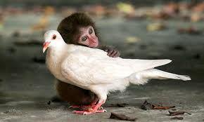 La Evolución de la Conciencia Animal_Viaje Hacia Si Mismo-33