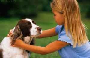 Los Perros son Capaces de Sentir el Dolor de los Humanos - Viaje Hacia Si Mismo-00