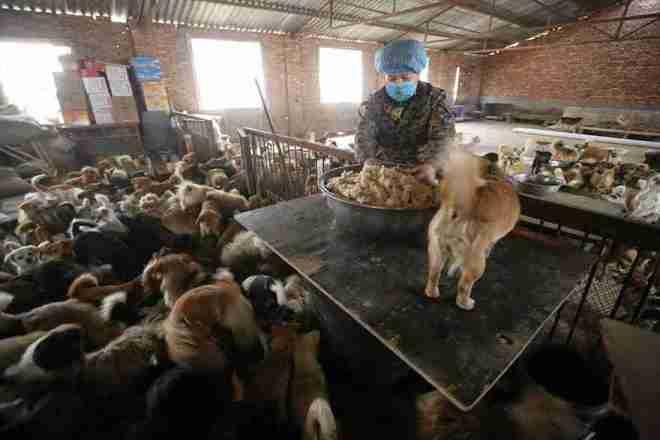1.300 perritos con hogar gracias a cinco mujeres - Viaje Hacia Si Mismo-00