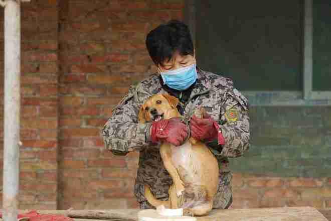 1.300 perritos con hogar gracias a cinco mujeres - Viaje Hacia Si Mismo-55