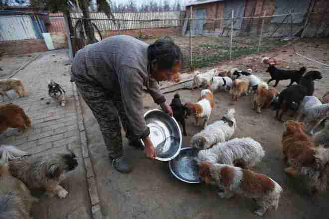 1.300 perritos con hogar gracias a cinco mujeres - Viaje Hacia Si Mismo-77