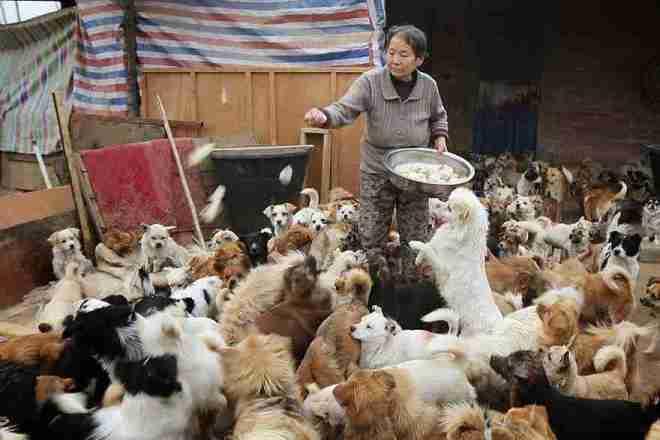 1.300 perritos con hogar gracias a cinco mujeres - Viaje Hacia Si Mismo