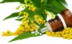 Informe del gobierno suizo la homeopatía es eficaz y económica-Viaje Hacia Si Mismo