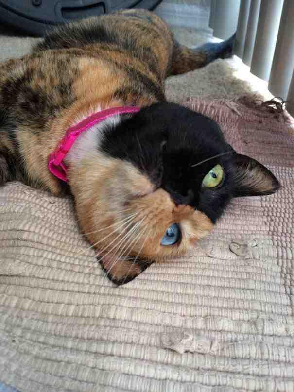 La gata Venus, una felina con dos caras-Viaje Hacia SI Mismo-00
