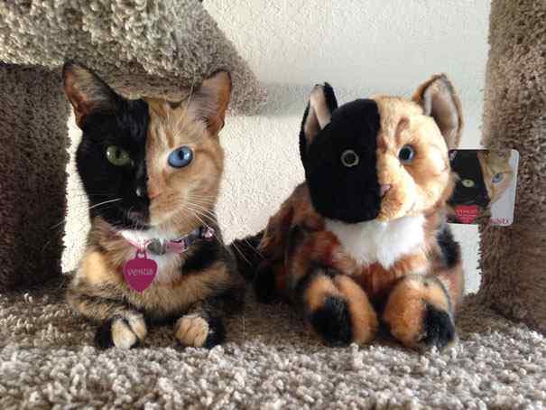 La gata Venus, una felina con dos caras-Viaje Hacia SI Mismo-77