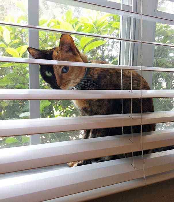 La gata Venus, una felina con dos caras-Viaje Hacia SI Mismo-99