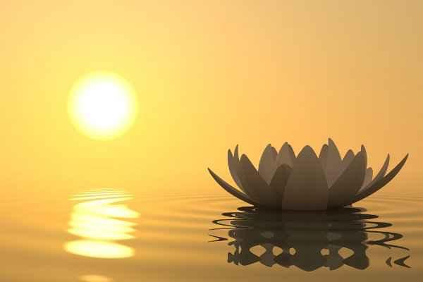 La Naturaleza de la Ira y Cómo podemos Liberarla-Thich Nhat Hanh - Viaje HaCIA SI MISMO-55