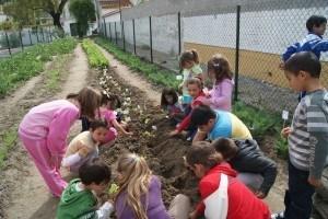 El huerto escolar la importancia de poner en contacto a nuestros hijos con la naturaleza-Viaje Hacia si mismo-11