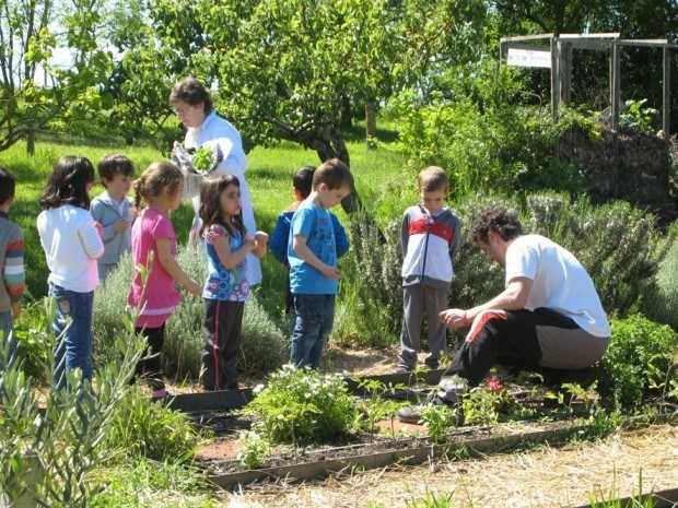 El huerto escolar la importancia de poner en contacto a nuestros hijos con la naturaleza-Viaje Hacia si mismo