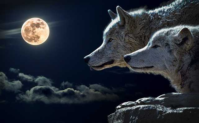 Luna Llena de Sagitario-Viaje Hacia Si Mismo