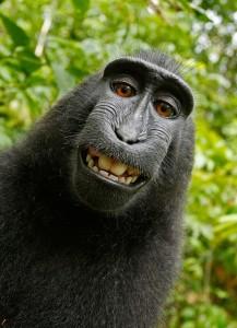 Selfie, el retorno del yo-Tristán Llop-Viaje Hacia Si Mismo