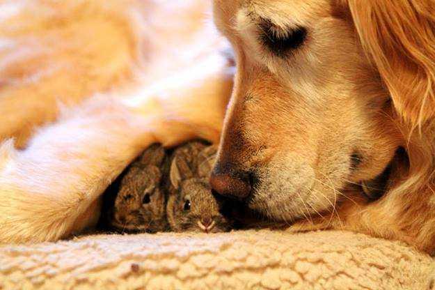 Compasión y Bondad por los Animales-Viaje Hacia Si Mismo