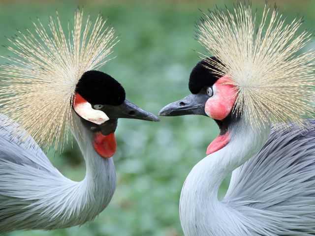Costa Rica será el primer país del mundo en cerrar sus zoológicos-Viaje Hacia Si Mismo