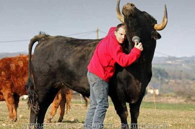 La hermosa vida en común de un joven granjero y el toro de lidia que adoptó-Viaje Hacia Si Mismo