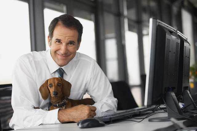 Llevar tu perro a la oficina favorece el clima laboral-Viaje Hacia Si Mismo