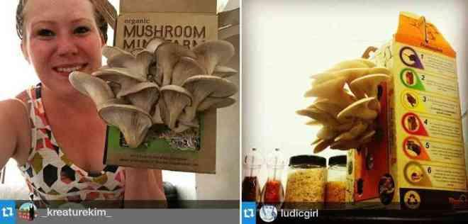 Mushgarden, cultiva tus propias setas-Viaje HACIA SI MISMO-11