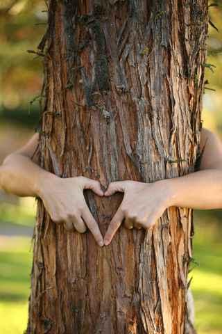 Abrazar árboles ha sido oficialmente validado por la ciencia-Viaje Hacia Si Mismo-00