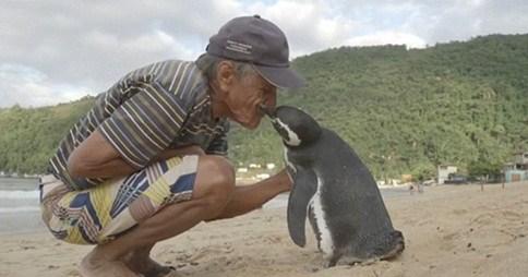 La increíble historia del pingüino Dindim y su salvador-Viaje Hacia Sí Mismo